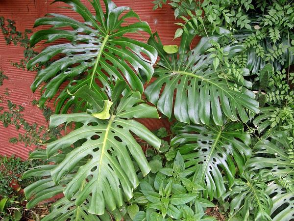 10 plantas venenosas que tenemos en casa - Plantas venenosas de interior ...