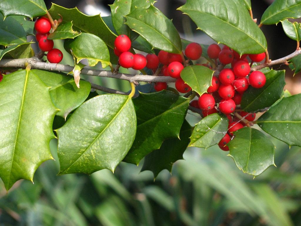 10 plantas venenosas que tenemos en casa for Como se llaman las plantas ornamentales