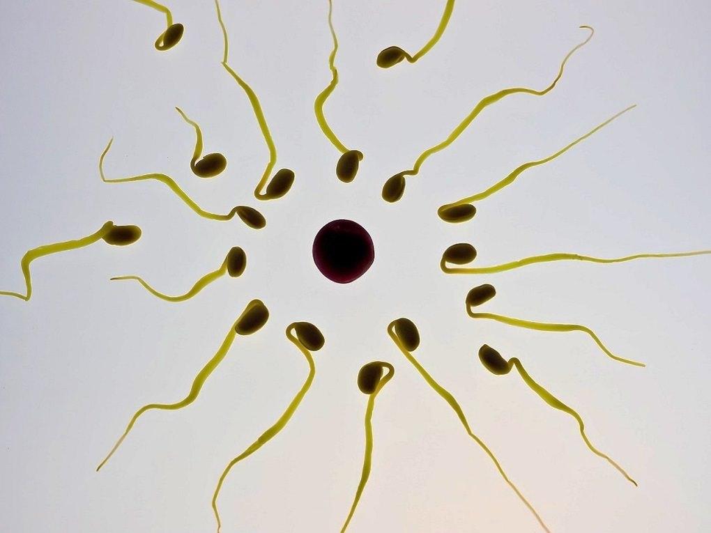 por qu cantidades tan grandes de espermatozoides. Black Bedroom Furniture Sets. Home Design Ideas