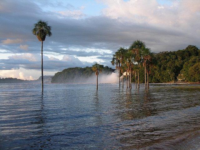 mitad-arboles-amazonas-peligro-extincion-2