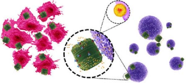 Representación esquemática en la que se muestran los anticuerpos uniendose a la superficie del biosilico (verde) que contiene el fármaco (amarillo) y atacando a la célula cancerosa (morado). Imagen extraída del artículo original