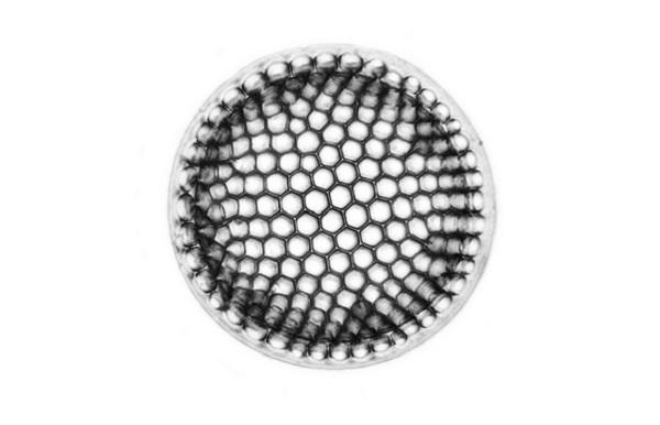 Fósil diatomea. Fuente: Picturepest/Flickr
