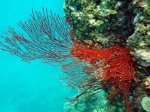 Gran Barrera de Coral. Fuente: Paul Toogood/Flickr