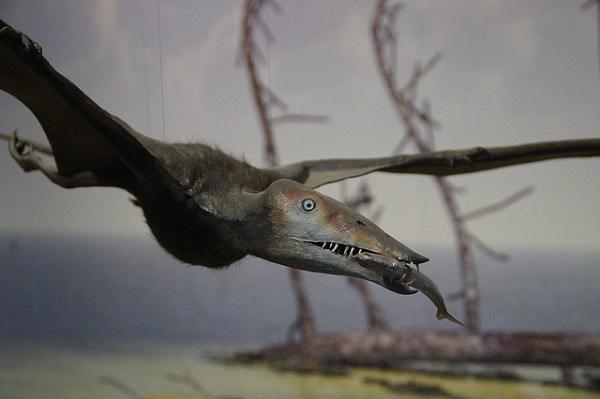 curiosidades-dinosaurios-3