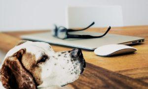 perro-buen-olfato