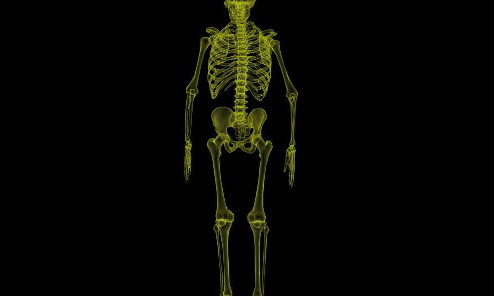 Cuántos huesos tiene el cuerpo humano? Te lo contamos