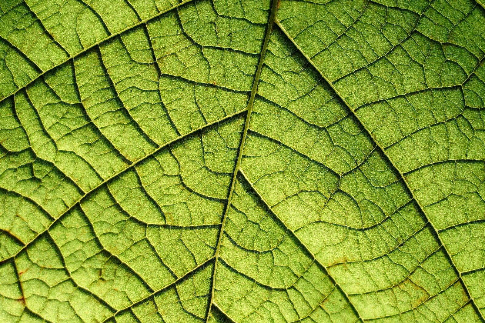 Qu es la fotos ntesis descubre c mo se alimentan las for Como se llaman las plantas ornamentales