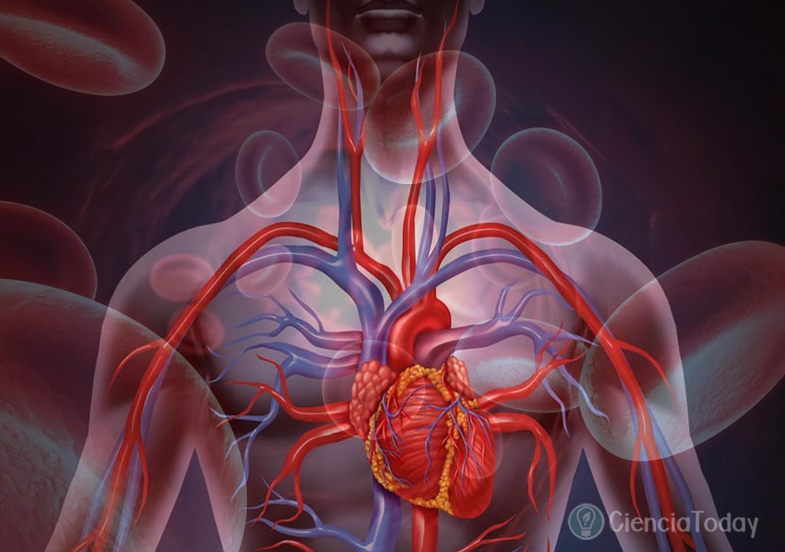¿Cuántos Litros De Sangre Tiene El Cuerpo Humano